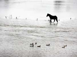 Horse trapped in Skipton flood