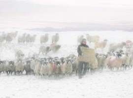 Shepherd in Ribblesdale