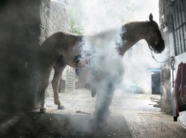 The Farrier at work