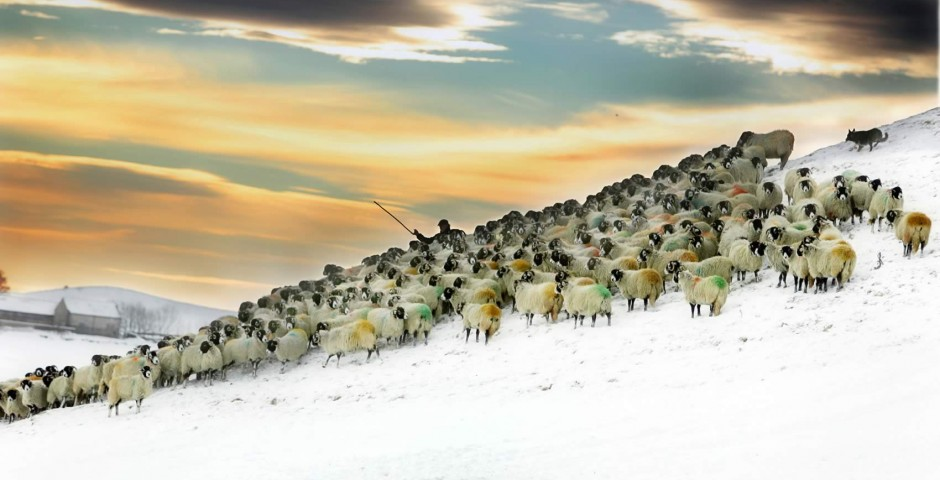 A shepherd on Malham Moor
